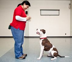 How to Teach a dog to Sit and Stay: Taching A Dog ~ petsrank.com Dogs Inspiration