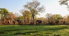 Wildlife Camp // South Luangwa National Park