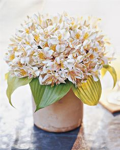 Use a massive gathering of a single type of flower for a big impact. Dainty alstroemeria make much more of an impression when grouped by the dozen. A neat dome of them -- with every leaf removed -- is softened by a cuff of chartreuse hosta leaves.