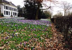 While I was running. Early spring in Holland