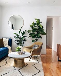 Indoor Plants That Purify The Air In Your Home And Office Best Of    Futuredesign | Indoor Gradens In 2019 | Indoor Plants, Plants, Cactus Plants