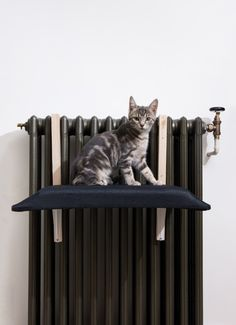 5107 best diy decor and furniture projects images on pinterest in from the new book diy projects for cats dogs a tutorial solutioingenieria Choice Image