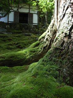 京都新緑散歩3   +西芳寺+