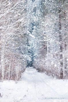 Photographie d'hiver forêt dans la neige de par GeorgiannaLane