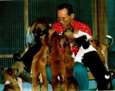 My king and his dogs ♥ King of Thailand. My beloved King, ♥Bhumibol Adulyadej, Rama IX, the ninth monarch of the Chakri Dynasty, crowned on the 9th June 1946, is the longest ever reigning King of Thailand and the defender of the Buddhist faith in Thailand. http://www.islandinfokohsamui.com/