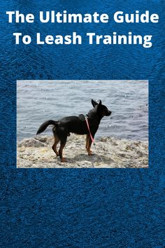Free Guide Reveals Step-By-Step How To Leash Train Your Dog Or Puppy. # Leash training #dog training #puppy training Online Dog Training, Leash Training, Training Your Dog, Puppies, Dogs, Free, Cubs, Pet Dogs, Doggies