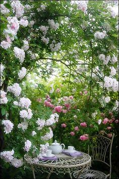 バラ咲く季節