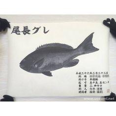 デジタル魚拓サービス 魚墨で作成した尾長グレの墨魚拓です。  It is a sumi fish print of a largescale blackfish.  www.uosumi.net/