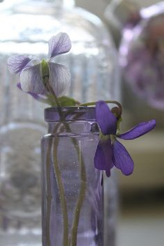 My sweet violets... by 52 Flea