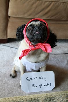 pictures of PUGS in costume! where are the pugs going? a halloween party? Haha Funny, Funny Cute, Funny Dogs, Funny Animals, Cute Animals, Funny Stuff, Funny Shit, Funny Things, 9gag Funny