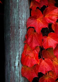 red on wood