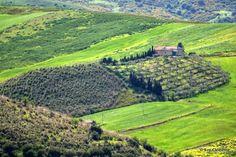 Salvatore Clemente: Fotografie: Verde di Sicilia