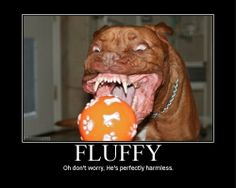 angry animals | Fluffy Funny Angry Animals (6 pics)
