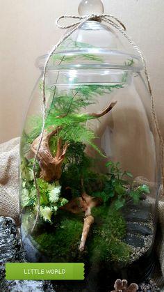 Terrarium Scene, Terrarium Ideas, Moss Terrarium, Bottle Plant, Bottle Garden, Paludarium, Vivarium, Plants In Bottles, Aquascaping