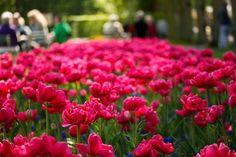 wonderful field of pink pink pink!!