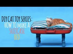 ▶ DIY Cat Toys - How to Make a Suitcase Bed - YouTube