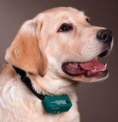 Top Dog shock training collars