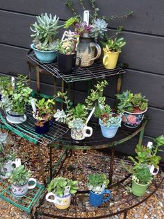 The Plant Shop at San Diego Botanic Garden has a variety of succulents for sale including these planted in whimsical containers and tea cups.
