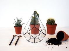 Medium Glass Pyramid Terrarium Glass Terrarium by NojaGlassDesign