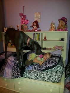 Great dane:  please, can i share your bed?!