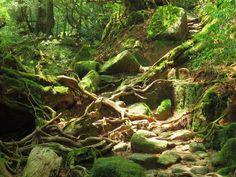 Southwest Islands - Yukashima - Shiratani Unsuikyo ravine