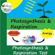 Photosynthesis and Cellular Respiration: Comparison with Answer Key Energy Comparison, Photosynthesis And Cellular Respiration, Electron Transport Chain, Matching Worksheets, Chemical Formula, Interactive Notebooks, Biology, This Or That Questions, Target