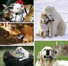 Strange animal friends... Love the polar bear & puppy :)