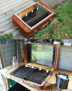 An old suitcase makes a great little cold frame.I knew I saved those old suitcases for some reason Starting Seeds Indoors, Hothouse, Decoration Plante, Old Suitcases, Mini Greenhouse, Reuse Recycle, Garden Structures, Plantation, Garden Spaces
