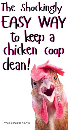 The easiest way to maintain your coop!, Chickens and Poultry on the Homestead Chicken Coop – Cleaning A Chicken Coop – Deep Litter Method – How To Clean Chicken Coop – Chicken Coop Ideas Cute Chicken Coops, Chicken Coop Designs, Backyard Chicken Coops, Chicken Coop Plans, Building A Chicken Coop, Diy Chicken Feeder, Inside Chicken Coop, Chicken Names, Cute Chickens