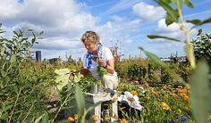 Copenhagen: Urban gardens liven up Ørestad | Sustainable Cities