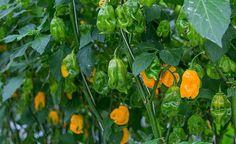 Horticulture #greeneem