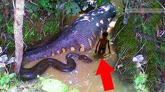 10 Sinh Vật Khủng Khiếp Nhất Rừng Rậm Amazon | Chuyen La The Gioi
