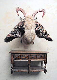 mister finch art: carpet moth
