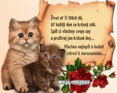 Mandala, Cats, Birthday, Quotes, Blog, Movie Posters, Animals, Google, Quotations