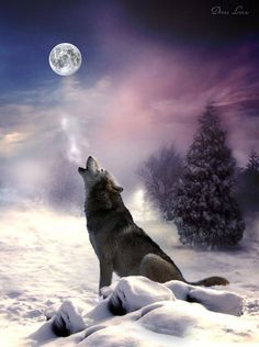 The wolf has a very real connection to the Moon and calls to the Mother. Just beautiful.
