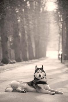 If I have any beliefs about immortality, it is that certain dogs I have known will go to heaven,and very,very few persons. James Thurber.