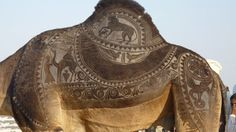 Amazing Art On Camels | This and That...