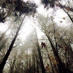 It's a fog in the trees sort of Monday. Beauty  from the Hamma Hamma River by @mattmanguso. #hoodcanal #wildsidewa #olympicnationalpark #monday #fog #autumn #beauty #love #outside #fall #tree