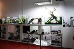 Floraquatic workshop