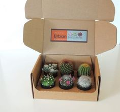 Our gift box comes with a beautiful selection of six cacti in their growing pots. Great mix of cactus in a gift box Cactus Gifts, Succulent Gifts, Succulents In Containers, Planting Succulents, Succulents Drawing, Indoor Succulents, Rare Succulents, Porch Boxes, Decoration Plante