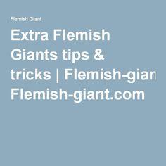 Extra Flemish Giants tips & tricks   Flemish-giant.com More