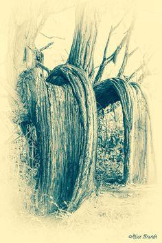 A tree ....
