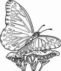 71 Best Butterfly Coloring Pages Images Butterflies Coloring
