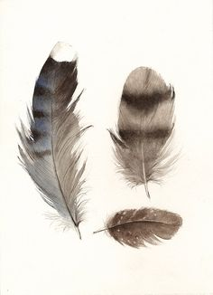 "feathers painting, watercolor, art, wall, decor, earth tones, ""Found Feathers no. 3"" Large Archival Print"