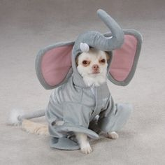 $19.95-$22.99 Casual Canine Wild Safari Animal Gray Dumbo Elephant Halloween Dog Costume X-Large - Cause Larger Than Life Adoration! This adorable Casual Canine Elephant Costume is simply-oh so cute. A grey low pile plush design with poly underlay, boasts an unforgetable life-like elephant head complete with large flappy ears and a distinctive trunk. Tail has metal brace for easy positioning and  ...