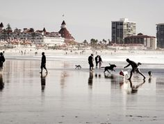 What a joyous place for dogs and those who love them!  Coronado San Diego, Cal  Dog Beach :)