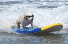 Bring The Dog on Your Family Vacation!  San Diego Dog Surf Vacation - Family Vacation Tips