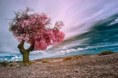 Chewing gum tree by Pedro