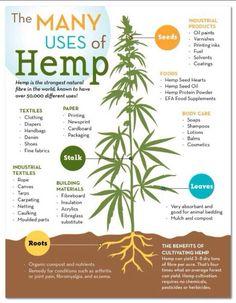 Hemp is so versatile !!!!