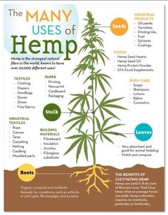 Hemp is so versatile !!!!